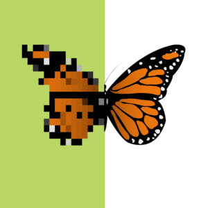 fine art butterfly half pixel half clear resolution green and white background
